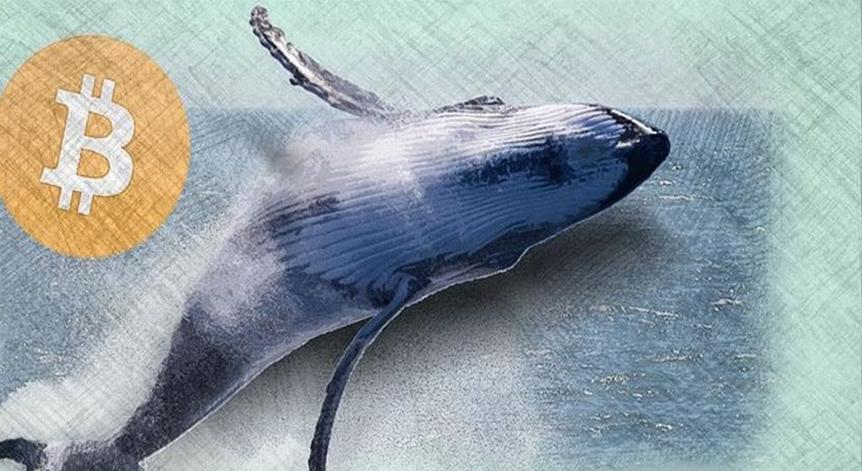 За последние месяцы биткоин-киты накопили 450 000 BTC