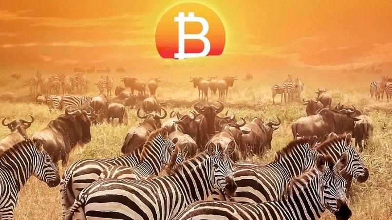 Криптоторговля в Африке стремительно растет