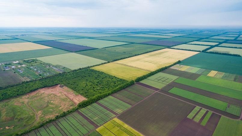 В Украине незаконно приватизировали 5 млн. гектаров земли